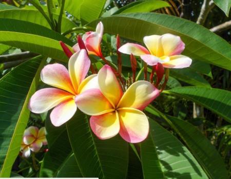 Kauai Flower