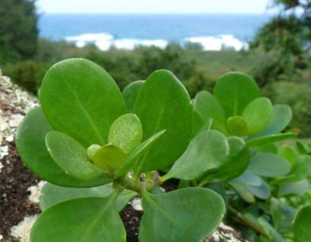 Botanical Garden Kauai
