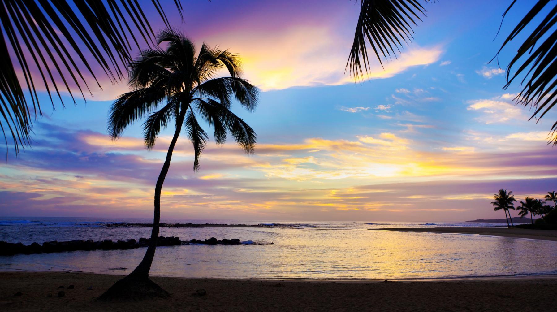 Palm Tree in the Kauai Sunset
