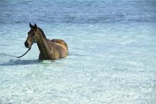 horse-in-bright-blue-crystal-clear-water