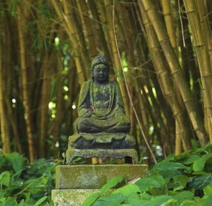 allerton garden kauai