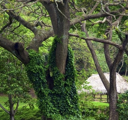 mcbryde garden kauai